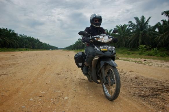 Palmölplantagen bis zum Horizont
