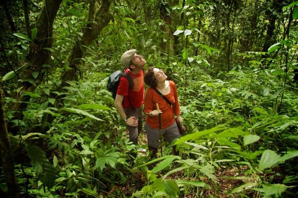 Im Urwald Sumatras